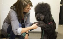Ned and Walt: LSE therapy dogs learn sign language to help students