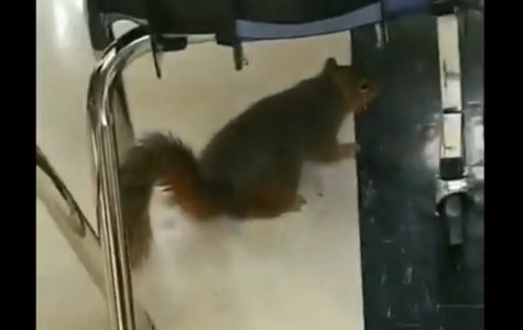 Squirrel released as senior prank causes panic, disruption in the Commons during lunch