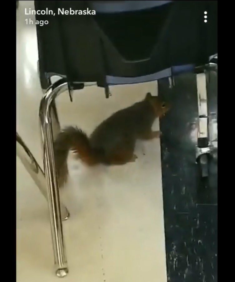 A picture of the squirrel in Commons, from an unknown student's Snapchat Story.