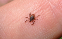 Tick numbers at a record-high